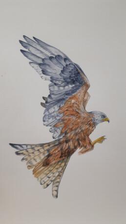 Bird, Irene Barnard, watercolour