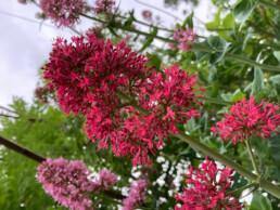 Crimson Colours, Lily Shillito, Digital photography