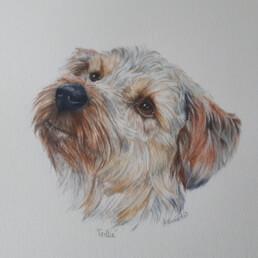 Dog, Irene Barnard, colour pencil